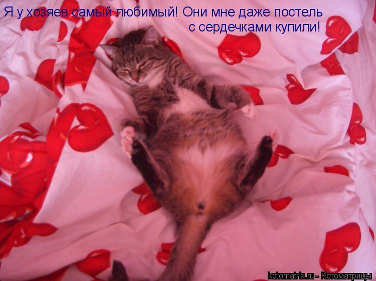 Котоматрица: Я у хозяев самый любимый! Они мне даже постель  с сердечками купили!