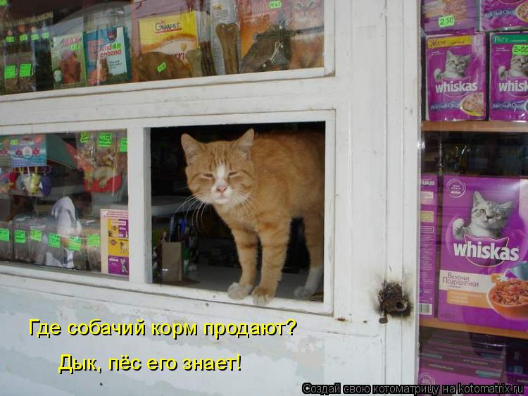 Котоматрица: Где собачий корм продают? Дык, пёс его знает!