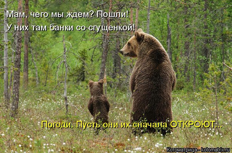 Котоматрица: Мам, чего мы ждем? Пошли! У них там банки со сгущенкой! Погоди. Пусть они их сначала ОТКРОЮТ...