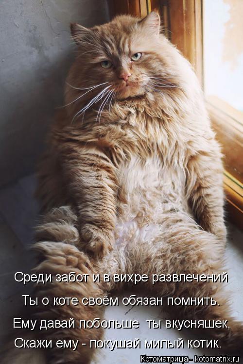 http://kotomatrix.ru/images/lolz/2015/08/13/kotomatritsa_U.jpg