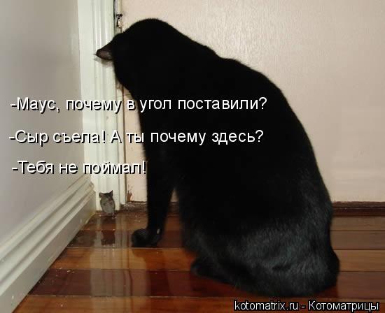 Котоматрица: -Маус, почему в угол поставили? -Тебя не поймал! -Сыр съела! А ты почему здесь?