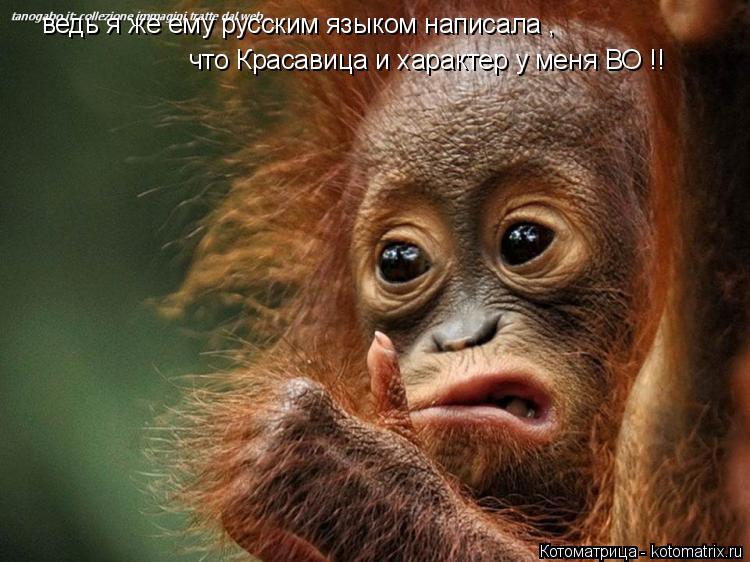 Котоматрица: ведь я же ему русским языком написала , что Красавица и характер у меня ВО !!