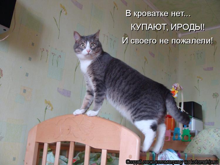 Котоматрица: В кроватке нет... КУПАЮТ, ИРОДЫ! И своего не пожалели!