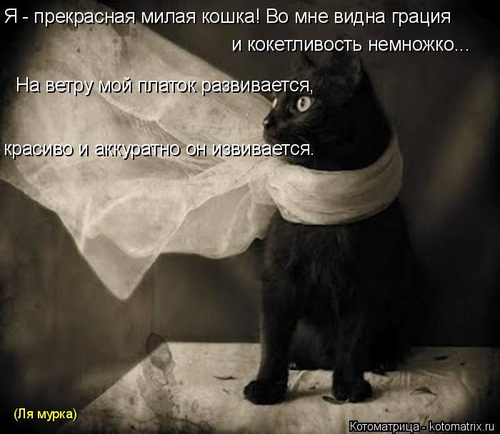 Котоматрица: (Ля мурка) Я - прекрасная милая кошка! Во мне видна грация и кокетливость немножко... На ветру мой платок развивается,  красиво и аккуратно он