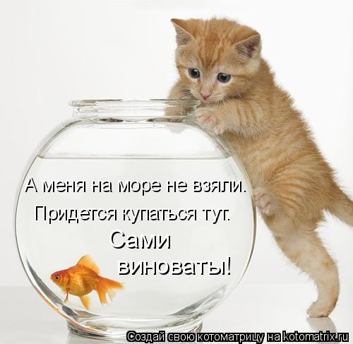 Котоматрица: А меня на море не взяли. Придется купаться тут. Сами  виноваты!
