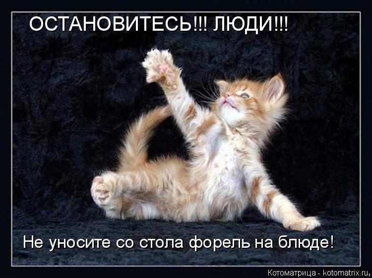 Котоматрица: ОСТАНОВИТЕСЬ!!! ЛЮДИ!!! Не уносите со стола форель на блюде!