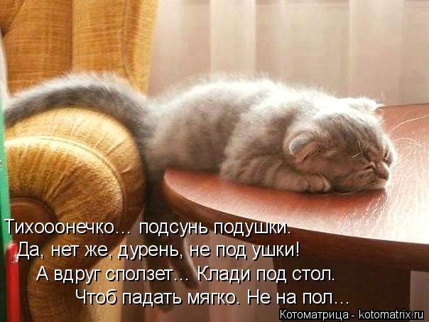 Котоматрица: Тихооонечко… подсунь подушки. Да, нет же, дурень, не под ушки! А вдруг сползет… Клади под стол. Чтоб падать мягко. Не на пол…