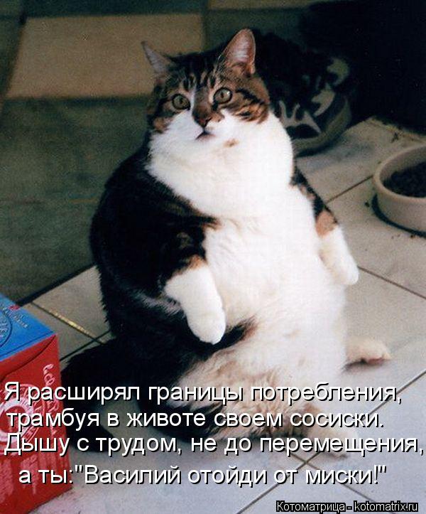 """Котоматрица: Я расширял границы потребления, трамбуя в животе своем сосиски. Дышу с трудом, не до перемещения, а ты:""""Василий отойди от миски!"""""""