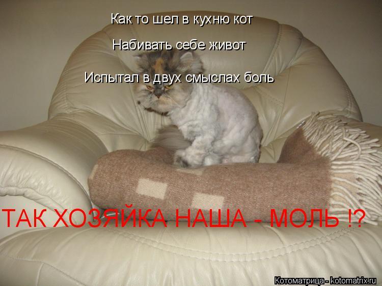 Котоматрица: Как то шел в кухню кот Набивать себе живот Испытал в двух смыслах боль  ТАК ХОЗЯЙКА НАША - МОЛЬ !?