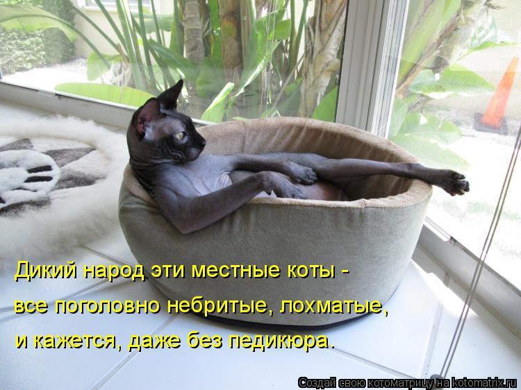 Котоматрица: Дикий народ эти местные коты - все поголовно небритые, лохматые,  и кажется, даже без педикюра.