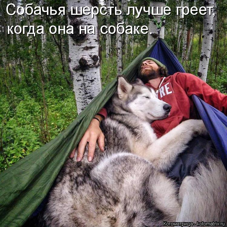 Котоматрица: Собачья шерсть лучше греет, когда она на собаке.