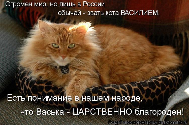 Котоматрица: Огромен мир, но лишь в России обычай - звать кота ВАСИЛИЕМ. Есть понимание в нашем народе, что Васька - ЦАРСТВЕННО благороден!