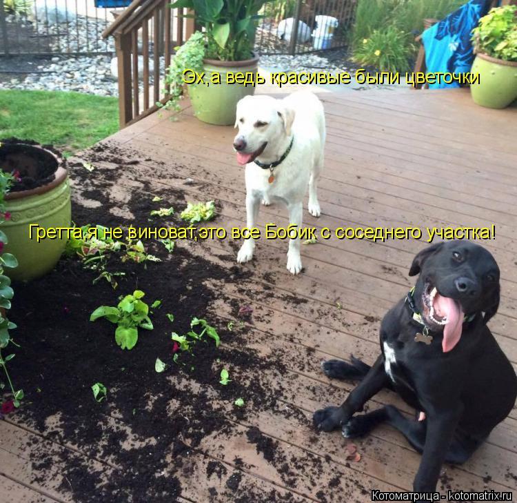 Котоматрица: Эх,а ведь красивые были цветочки Гретта,я не виноват,это все Бобик с соседнего участка!