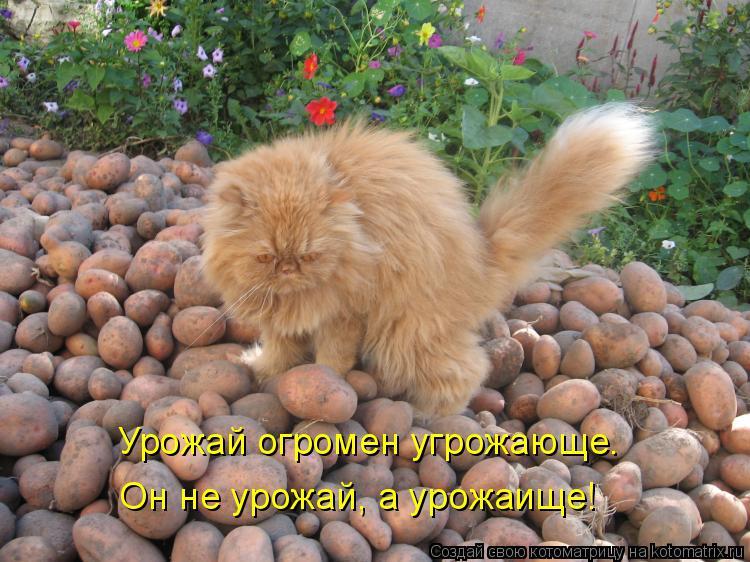 Котоматрица: Урожай огромен угрожающе. Он не урожай, а урожаище!