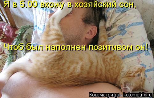 Котоматрица: Я в 5.00 вхожу в хозяйский сон, Чтоб был наполнен позитивом он!