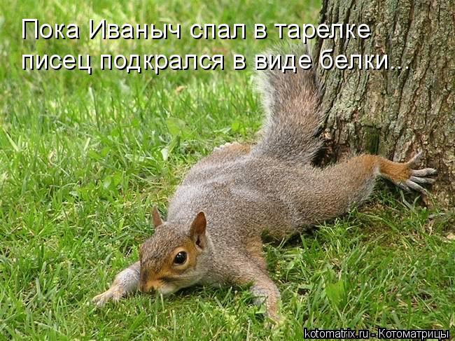 Котоматрица: Пока Иваныч спал в тарелке писец подкрался в виде белки...