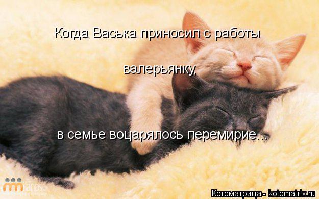 Котоматрица: Когда Васька приносил с работы валерьянку, в семье воцарялось перемирие...