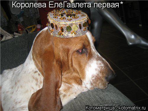 Котоматрица: Королева ЕлеГавлета первая * *