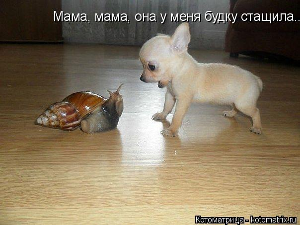 Котоматрица: Мама, мама, она у меня будку стащила...