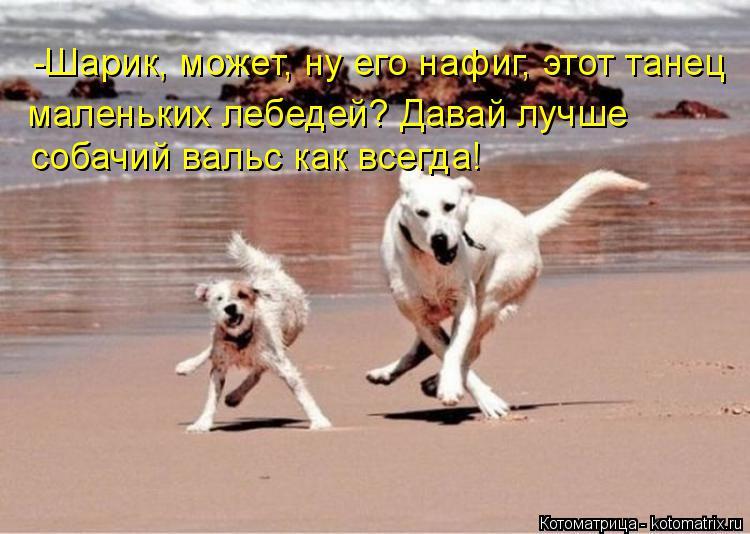 http://kotomatrix.ru/images/lolz/2015/08/19/kotomatritsa_1n.jpg