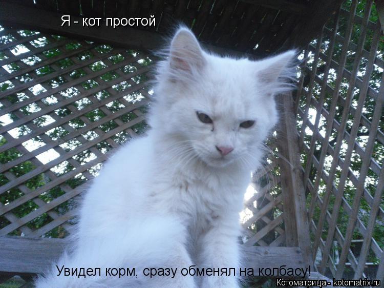 Котоматрица: Я - кот простой Увидел корм, сразу обменял на колбасу!