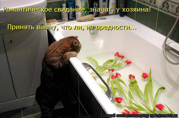 Котоматрица: Романтическое свидание, значит, у хозяина! Принять ванну, что ли, из вредности...