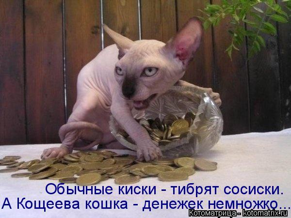 http://kotomatrix.ru/images/lolz/2015/08/19/kotomatritsa_lr.jpg