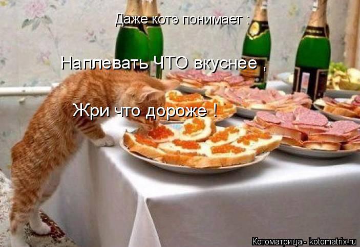 Котоматрица: Даже котэ понимает : Наплевать ЧТО вкуснее , Жри что дороже !