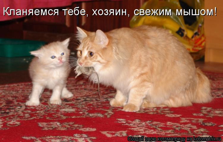 Котоматрица: Кланяемся тебе, хозяин, свежим мышом!