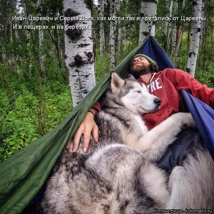 Котоматрица: Иван-Царевич и Серый Волк, как могли так и прятались от Царевны. И в пещерах. и на березах......