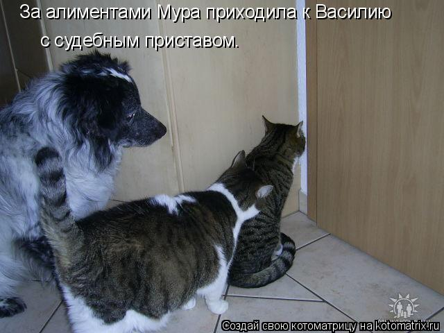 Котоматрица: За алиментами Мура приходила к Василию с судебным приставом.
