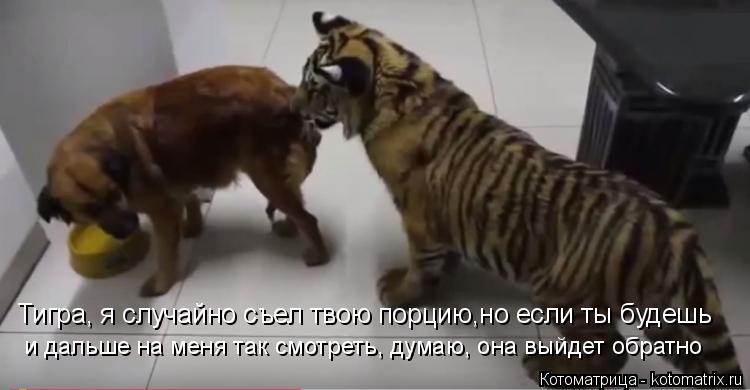 Котоматрица: Тигра, я случайно съел твою порцию,но если ты будешь и дальше на меня так смотреть, думаю, она выйдет обратно
