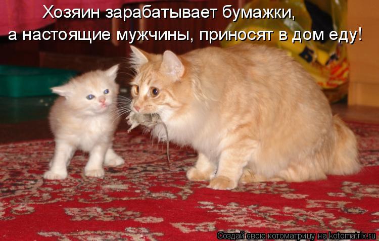 Котоматрица: Хозяин зарабатывает бумажки, а настоящие мужчины, приносят в дом еду!