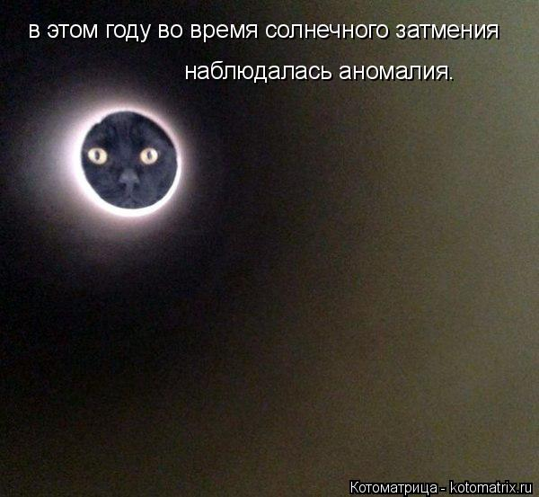 Котоматрица: в этом году во время солнечного затмения наблюдалась аномалия.