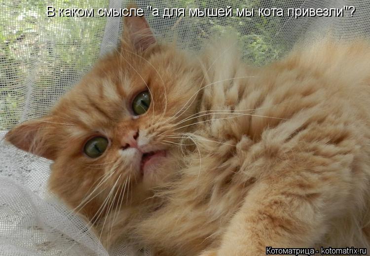 """Котоматрица: В каком смысле """"а для мышей мы кота привезли""""?"""
