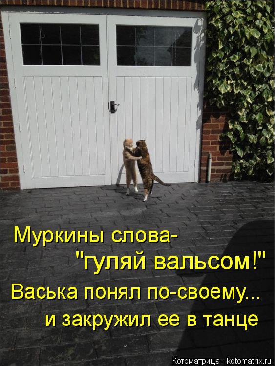 """Котоматрица: Муркины слова- """"гуляй вальсом!"""" Васька понял по-своему... и закружил ее в танце"""