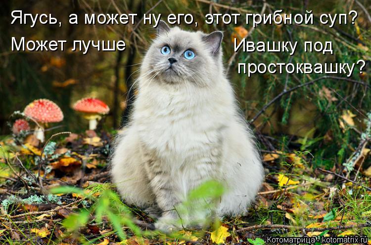 Котоматрица: Ягусь, а может ну его, этот грибной суп? Может лучше Ивашку под простоквашку?