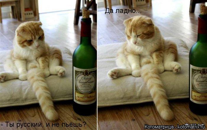 Котоматрица: - Ты русский, и не пьёшь? Да ладно...