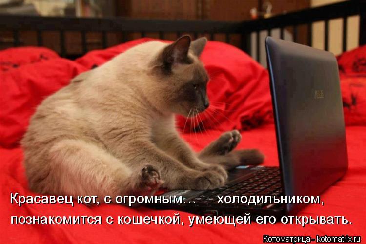 Котоматрица: Красавец кот, с огромным…     холодильником,  познакомится с кошечкой, умеющей его открывать.