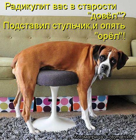"""Котоматрица: Подставил стульчик,и опять Радикулит вас в старости """"довёл""""? """"орёл""""!"""