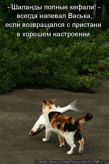 Котоматрица: - Шаланды полные кефали! - всегда напевал Васька,  если возвращался с пристани в хорошем настроении.