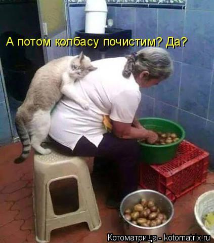 Котоматрица: А потом колбасу почистим? Да?