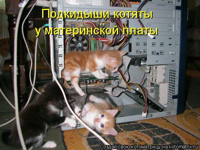 Котоматрица: Подкидыши котяты у материнской платы