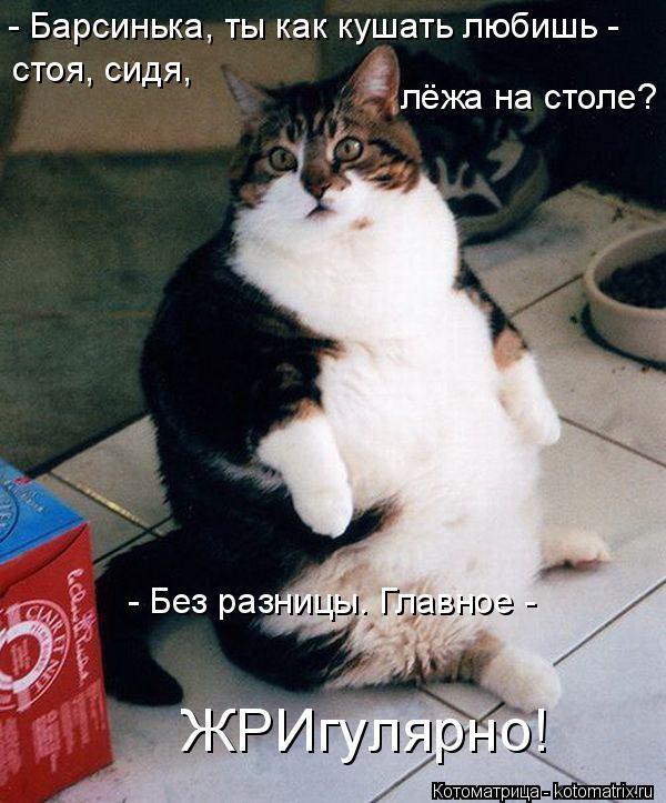 Котоматрица: - Барсинька, ты как кушать любишь -  стоя, сидя,  лёжа на столе? - Без разницы. Главное -  ЖРИгулярно!