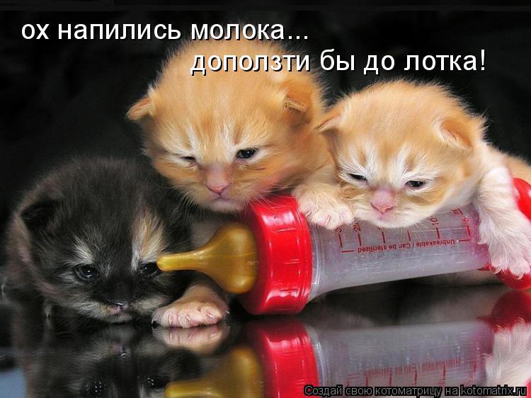 Котоматрица: ох напились молока... доползти бы до лотка!