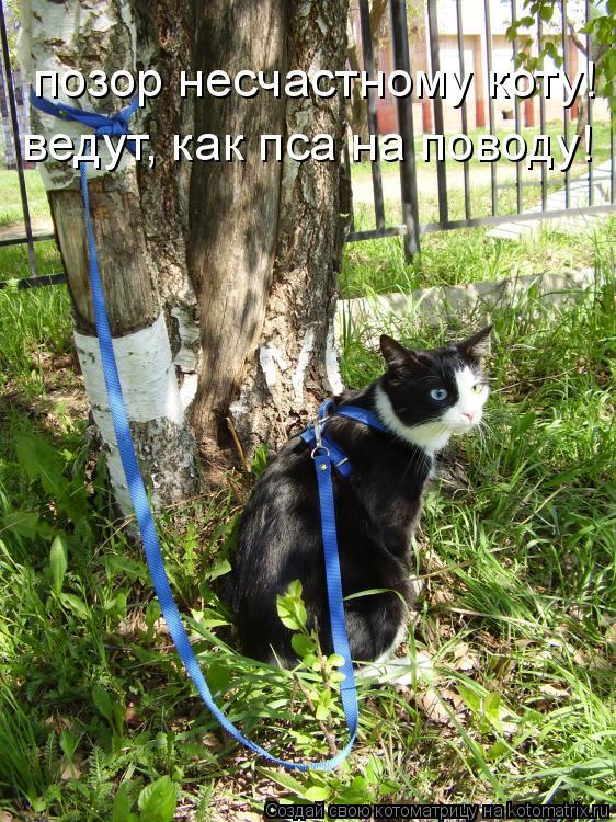 Котоматрица: позор несчастному коту! ведут, как пса на поводу!