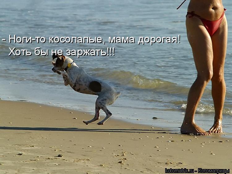 Котоматрица: - Ноги-то косолапые, мама дорогая! Хоть бы не заржать!!!