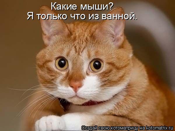 Котоматрица: Какие мыши? Я только что из ванной.