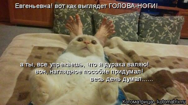 Котоматрица: Евгеньевна! вот как выглядет ГОЛОВА-НОГИ! а ты, все упрекаешь, что я дурака валяю! вон, наглядное пособие придумал! весь день думал......
