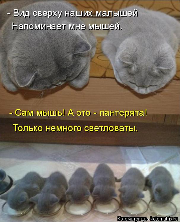 Котоматрица: - Вид сверху наших малышей Напоминает мне мышей. - Сам мышь! А это - пантерята! Только немного светловаты.